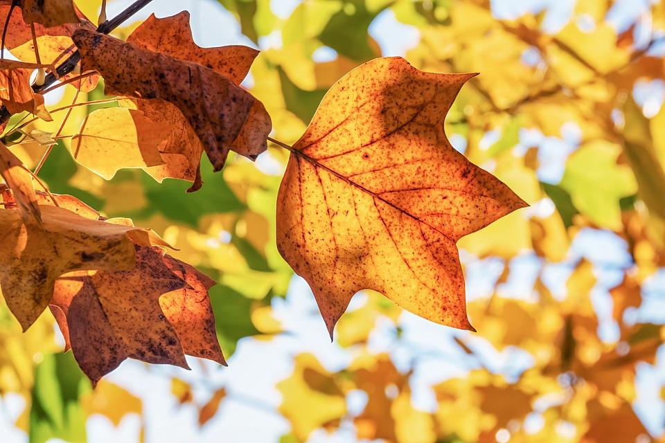 autumn-Social-TMI-1