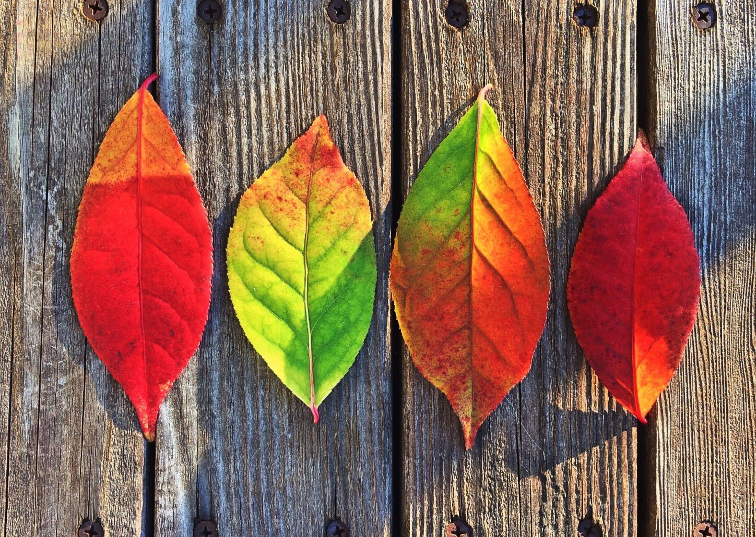 leaves-fall-colors-rainbow-1